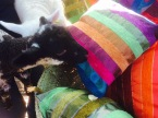 Woolly customers checking our cushions